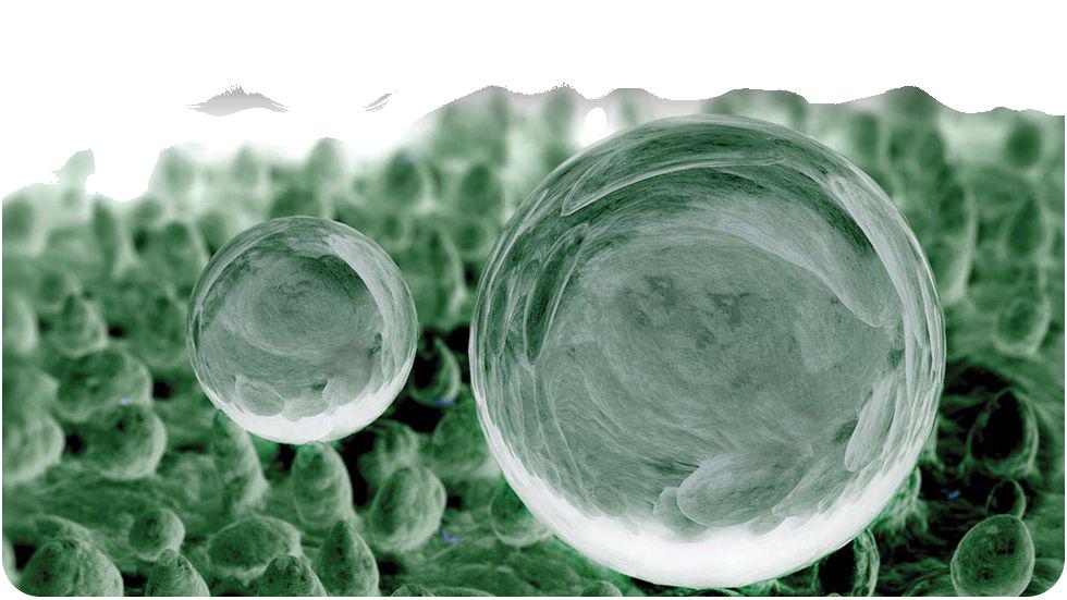 Lotus Leaf Effect - micrograph image