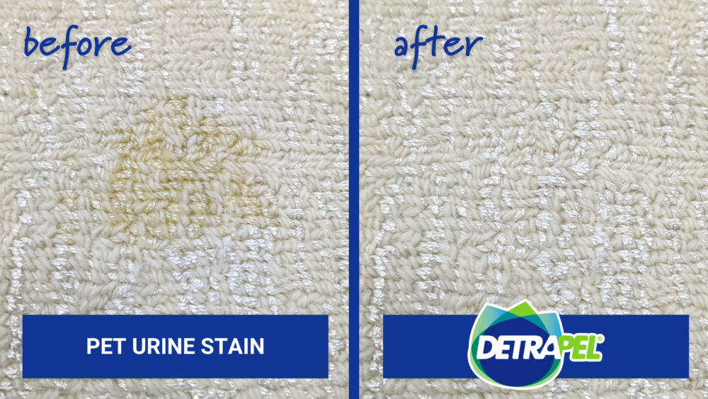 Pet Stain Odor Before & After